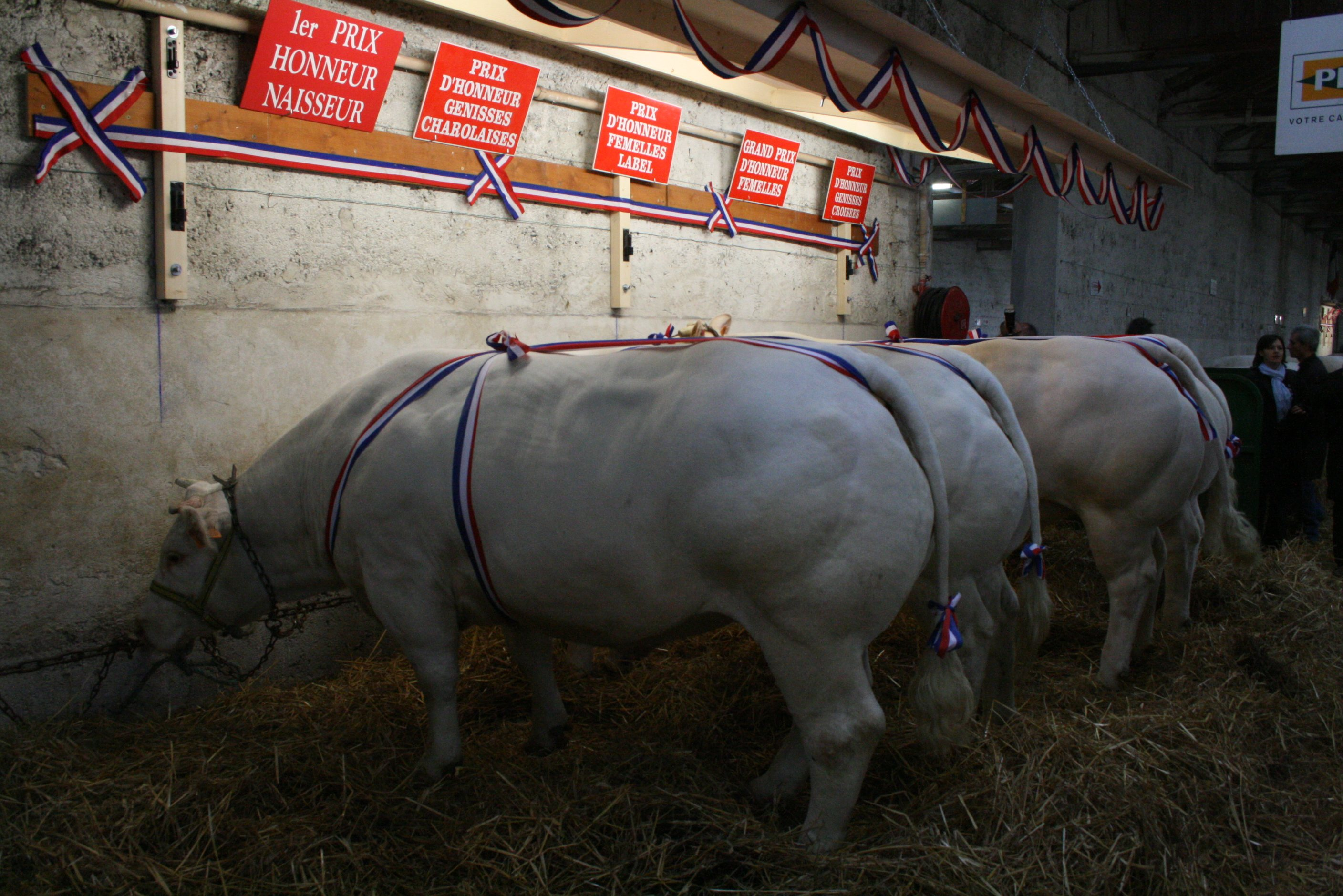 expo_anx_bouch_charolais_2