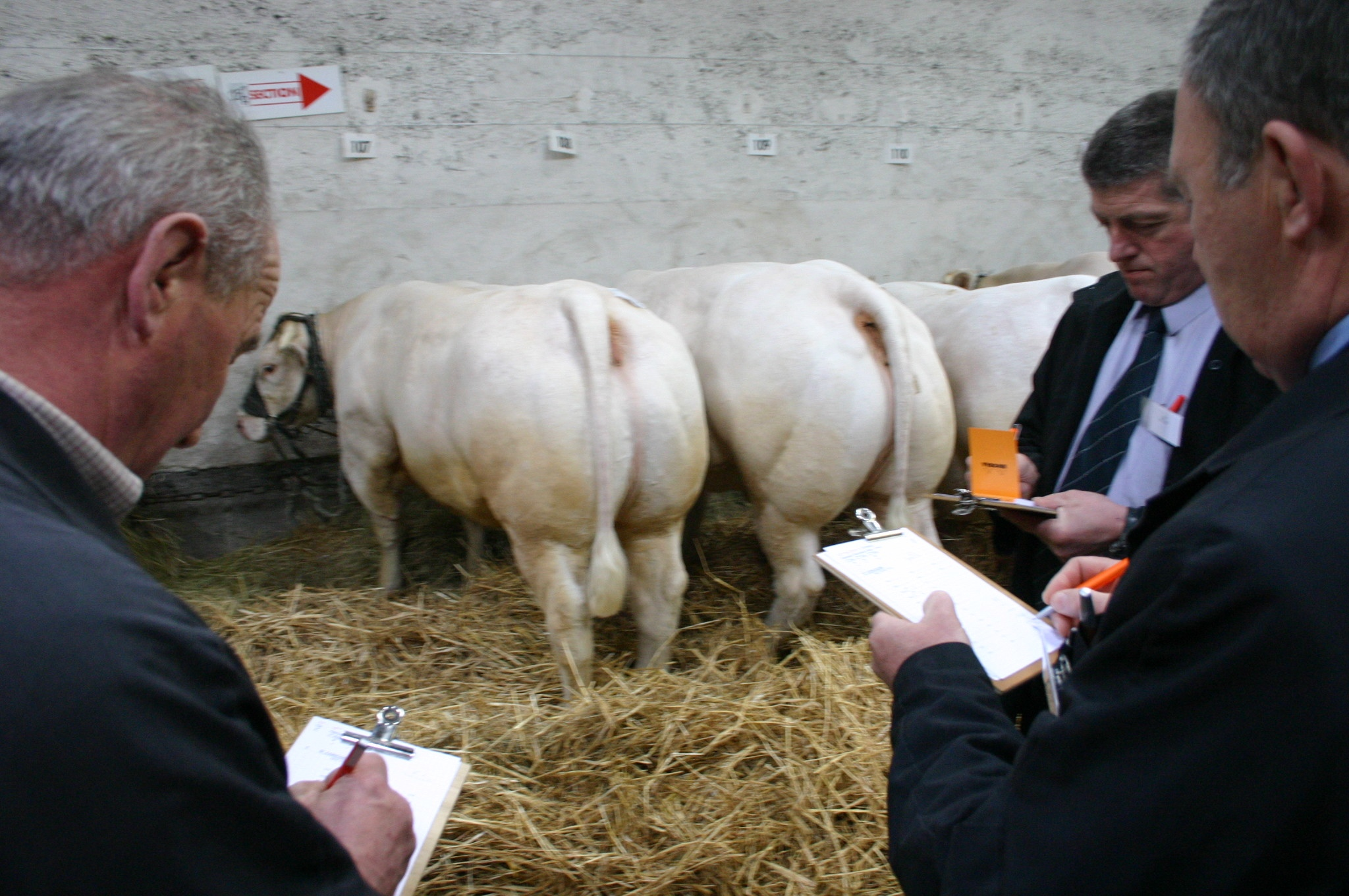 expo_anx_bouch_charolais_3